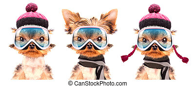 dog  dressed as skier isolated on a white background