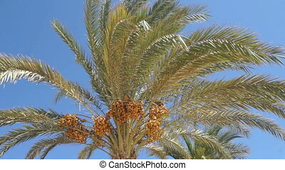 palm leafs in the blue sky