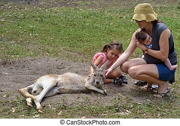 Eastern grey kangaroo female - Young mother with her little...