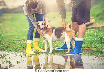 Young couple walk dog in rain. Details of wellies splashing...