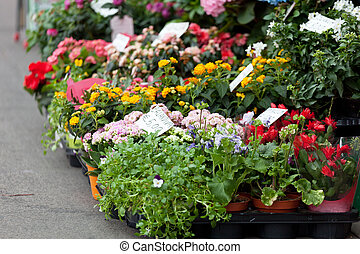 Street show-window of flower shop in Nilano, Europe