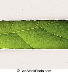Green leaf texture under torn paper plates. Vector, EPS10