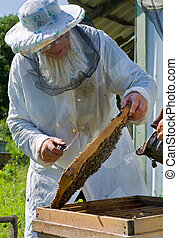 Beekeeper 53 - A beekeeper in veil at apiary among hives...