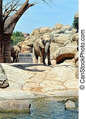 African elephant in natural environment.