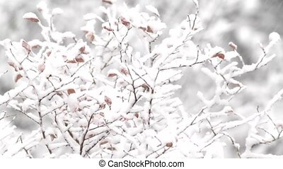 Blueberry bushes blowing - Video of several branches of a...