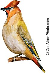 watercolor painting bird. vector illustration