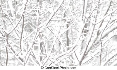 Forest branches covered with snow - Video of branches of...