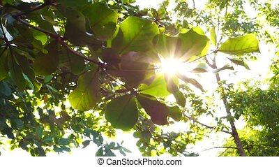 Sun shine through tree leaves slide