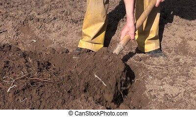 gardener digging soil with fork - gardener digging spring...