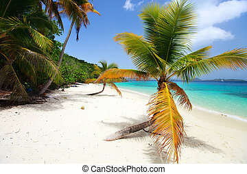 Beautiful tropical beach at Caribbean - Beautiful tropical...