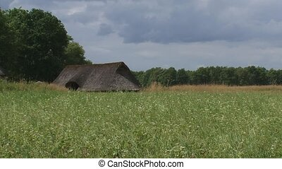 thatched roof of a reconstructed iron age farm behind...