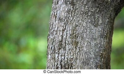 Tree trunks in nature blurred background. HD. 1920x1080 -...