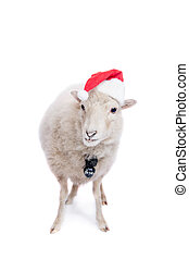Portrait Of sheep in christmas hat On White - Portrait Of...