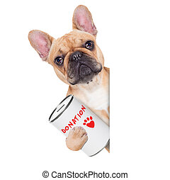 donation dog - french bulldog dog with a donation can ,...