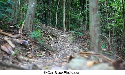 Group of trekkers hike through lush green jungle HD...