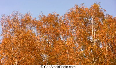 autumnal leaves on sky - Autumnal leaves on sky background