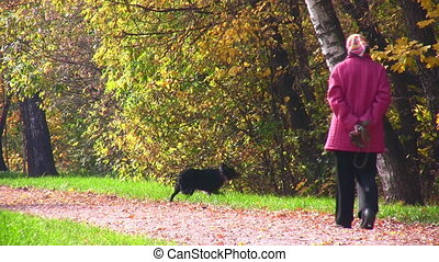 senior woman with dog in autumnal park