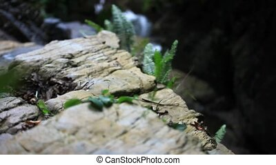 Fern leaf growing among the rocks at waterfall. HD....