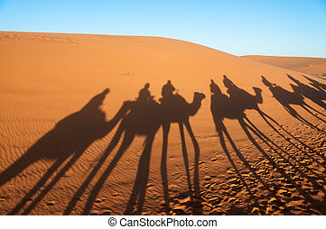 Caravan with tourists in the sahara desert. Morocco, Africa