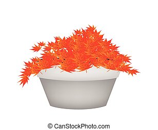 Red Maple Bonsai in A Flower Pot - Houseplant, Illustration...