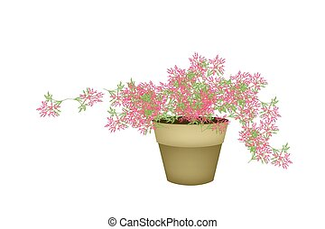 A Pink Flowering Plants in Flower Pot - Illustration of...
