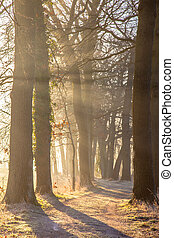 Sun beams through Rimed Trees
