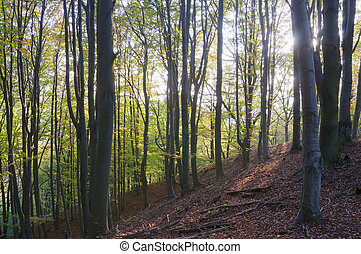 Back lit forest - Autumn forest detail with hillside and...