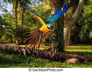 colorido, voando, Papagaio, em, tropicais, paisagem,