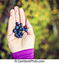 Woman hand giving blueberry vintage background - Young woman...