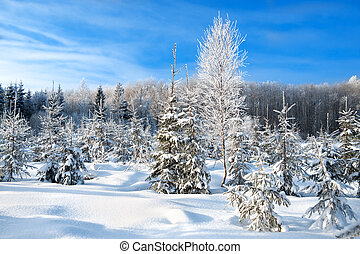 winter landscape with the forest and blue sky - beautiful...