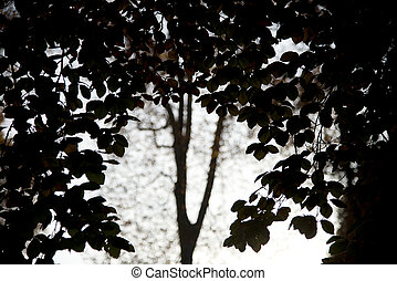 cave of leaves - view out of canopy trees to a tree - the...