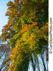 autumnal colors in the park - colorful colored trees under...