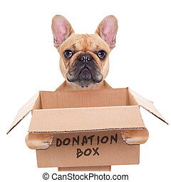 donation box dog - french bulldog dog holding a donation...