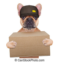 dog postman - postman french bulldog holding a shipping box...
