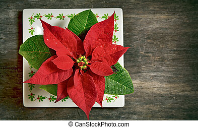 red christmas flower - red Christmas flower isolated on old...