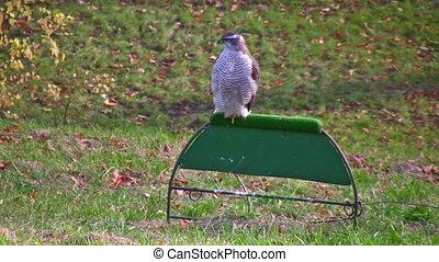 falcon kremlin moscow