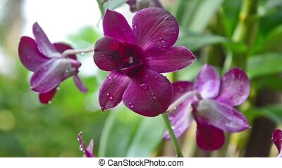 beautiful orchid - wonderful flower close up