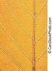 Orange leaf - Macro shot of the lamina of a tree leaf...