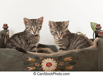 two young cats in crib - two young striped cats sitting in...
