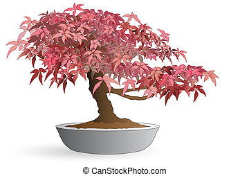 Bonsai of japanese maple - Isolated bonsai of japanese maple...