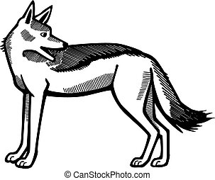 Jackal looking over shoulder - vector line drawing of a...