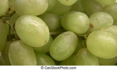 Grape green berries rotating
