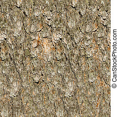 Pine tree bark seamless texture.