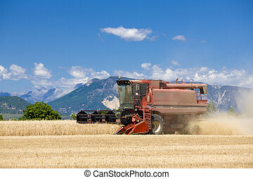 grain harvest, Alpes-de-Haute-Provence Departement, France