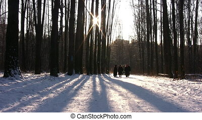 People seniors walking in winter wood