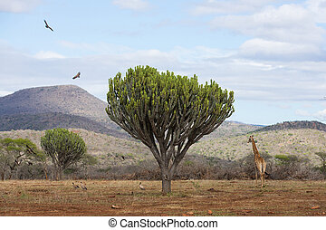 african scenery with wildlife