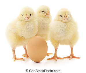 chickens and egg - brown egg and three chickens isolated on...