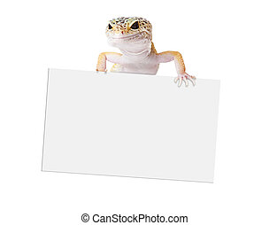 Gecko holding blank sign - A cute crested gecko lizard...