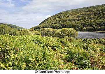 Wicklow Mountains National Park in the Ireland