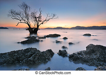Mangrove trees sunset - Mangrove trees and landscape sunset...